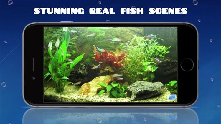 Aquarium HD : Tropical and Marine Fish Tank Scenes