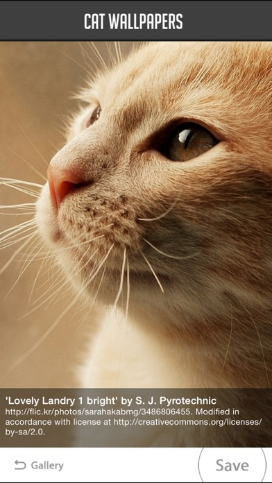Cat Wallpapers!Screenshot von 5