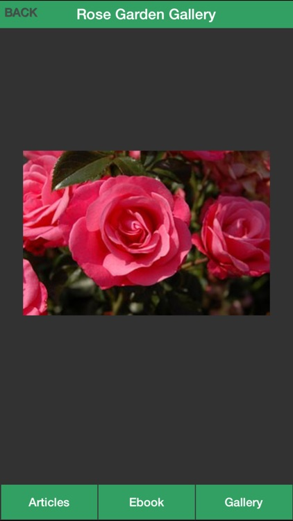 Rose Garden Guide - A Guide To Planting Your Own Rose Garden Successfully! screenshot-3