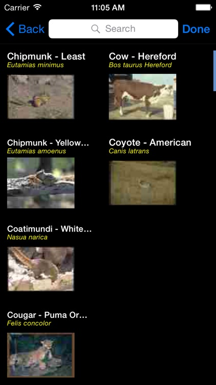 Mammals of North, Central & South America - A Mammal App screenshot-2