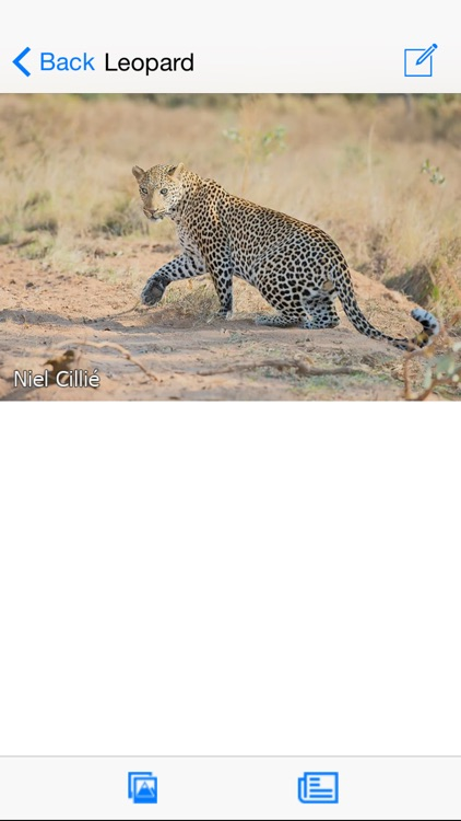 Animals of Kruger