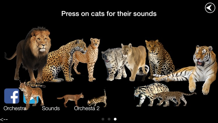 Wild Cats Orchestra