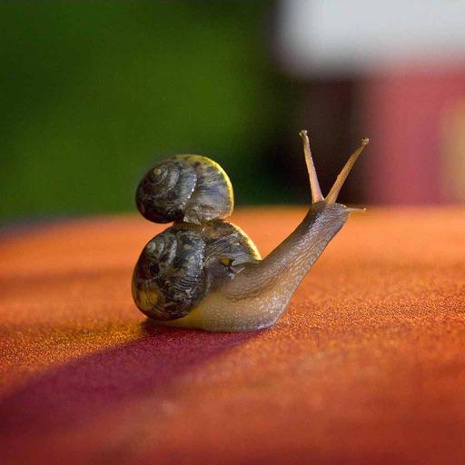 蜗居生活集