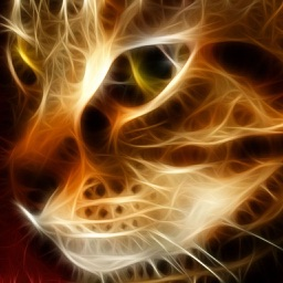 Amazing Cats Wallpapers