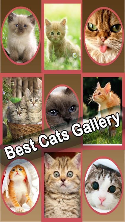 Best Cute Puppies and Cute Cat Wallpapers HD screenshot-3