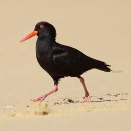 Booderee birds