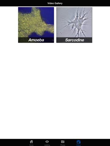Protozoan Identification Free-ipad-3