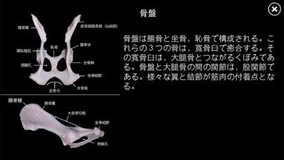 イヌの解剖学 - Dog Anatomy 3dスクリーンショット