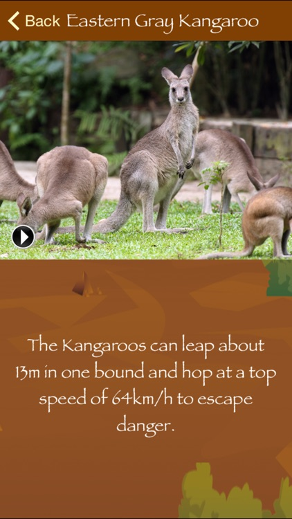 Australian Wildlife screenshot-2
