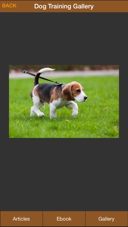 Dog Potty Training Guide - How To Potty Train Your Dog More Effectively screenshot-3