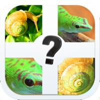 Codes for Zoomed Pic Quiz - Guess All The Animals In This Brand New Photo Trivia Game Hack