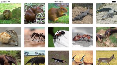 Zoo - Free Animal Videos, Sounds and Photos for Kids screenshot one