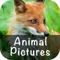 Animal Pictures Wallpaper