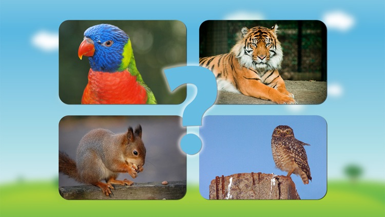 Animal sounds and photos for kids and babies - Touch to hear and learn animals sound and names screenshot-3