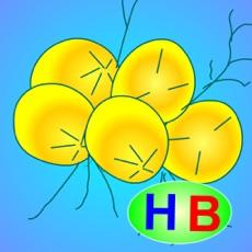 Activities of Truyện thiếu nhi: Cây dừa nghịch ngợm (HB)