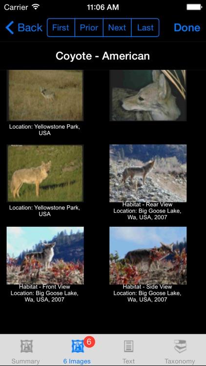 Mammals of North, Central & South America - A Mammal App screenshot-4