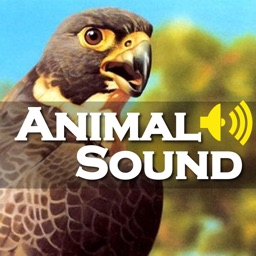 Animal Sound Effect Game