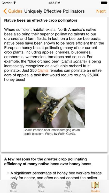 Wild Bee Gardens screenshot-4