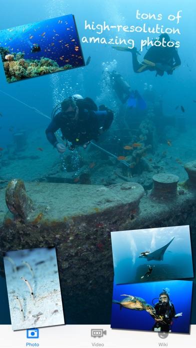 Scuba Diving - Amazing underwater world
