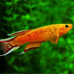 Encyclopedia of Tropical Fish