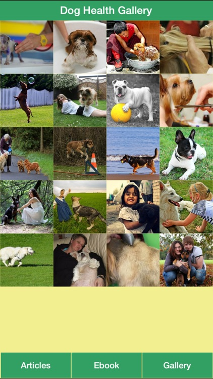 Dog Health Guide - Have a Healthy Dog and Happy Life for Your Dog!