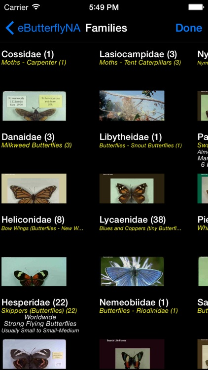 Butterflies & Moths of North America screenshot-1
