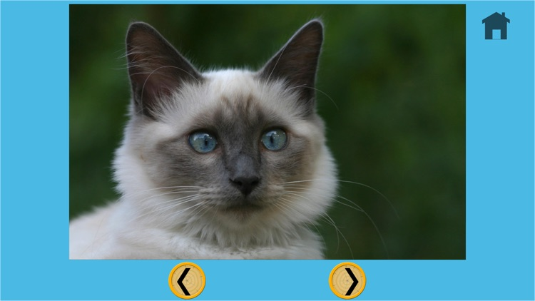 kids cat lovers - free screenshot-3