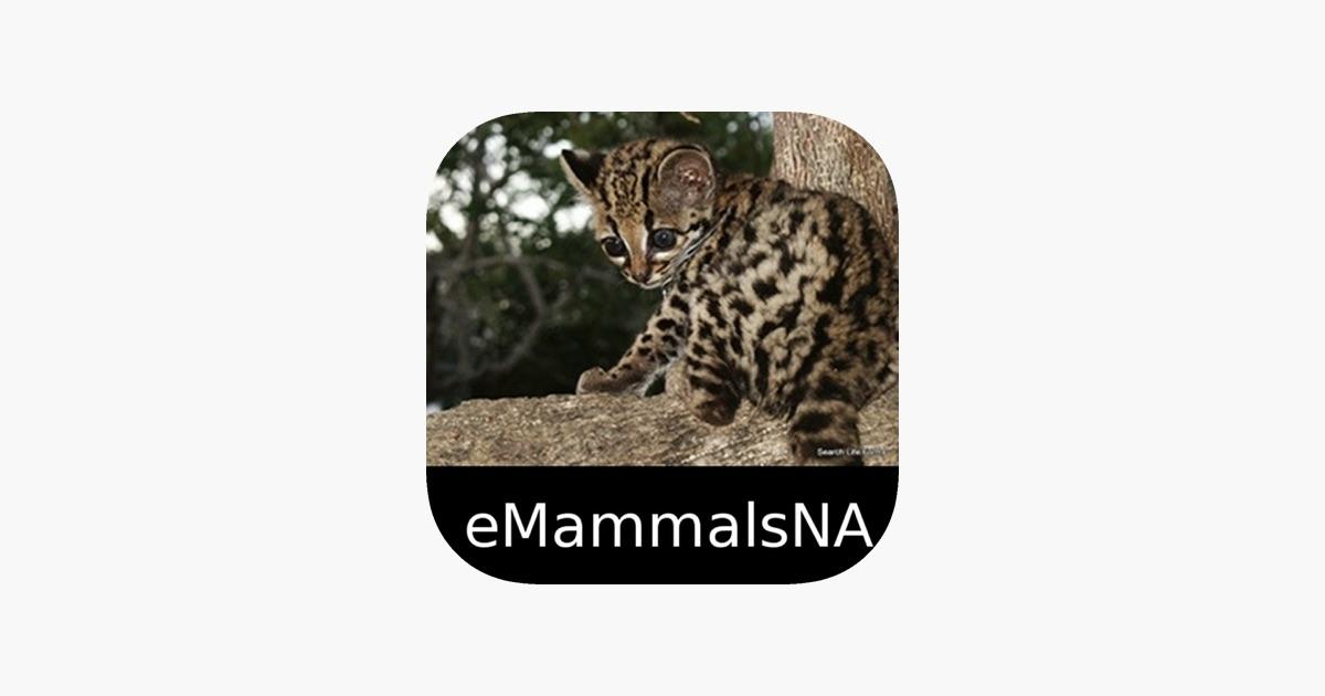 Mammals of North Central u0026 South America