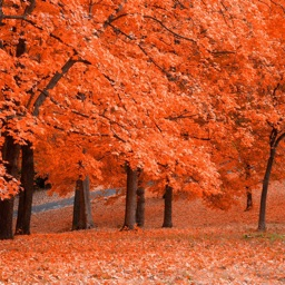 Fall Wallpapers - Beautiful Collections Of Fall Wallpapers