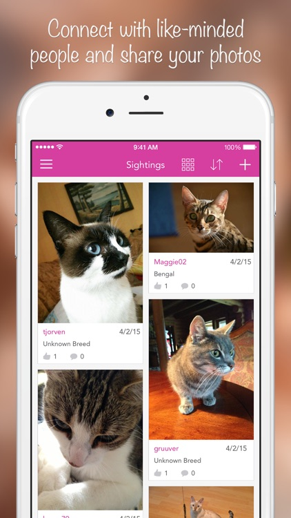 iKnow Cats 2 PRO - Cat Breed Guide screenshot-4