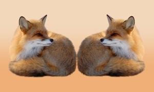 Animals Pair Match