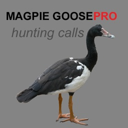 REAL Magpie Goose Calls - Hunting Calls for Magpie Geese - BLUETOOTH COMPATIBLE