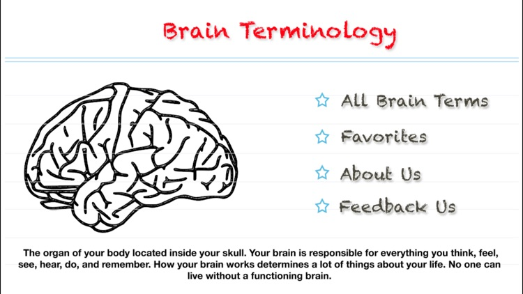 Brain Terminology