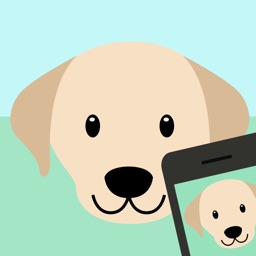 Dog Breed Identifier - Automatically identify a dog breed from a photo