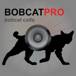 REAL Bobcat Calls - Bobcat Hunting -Bobcat Sounds HD