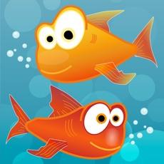 Activities of My Pet Aquarium