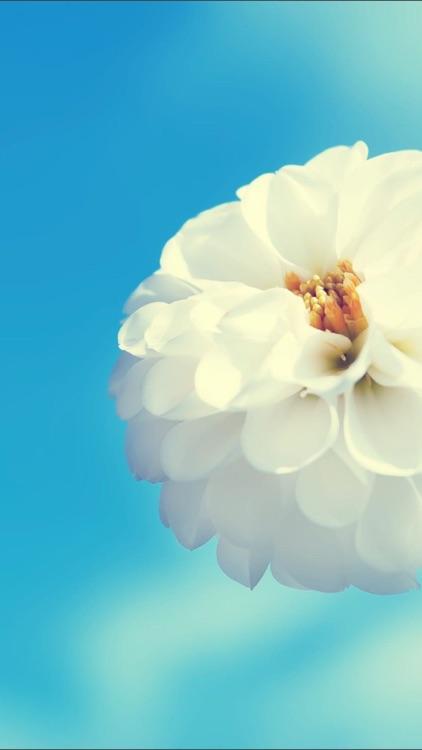 Flowers HD Wallpaper - Great Collection screenshot-3