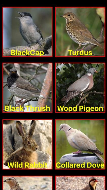 Birds Mimic