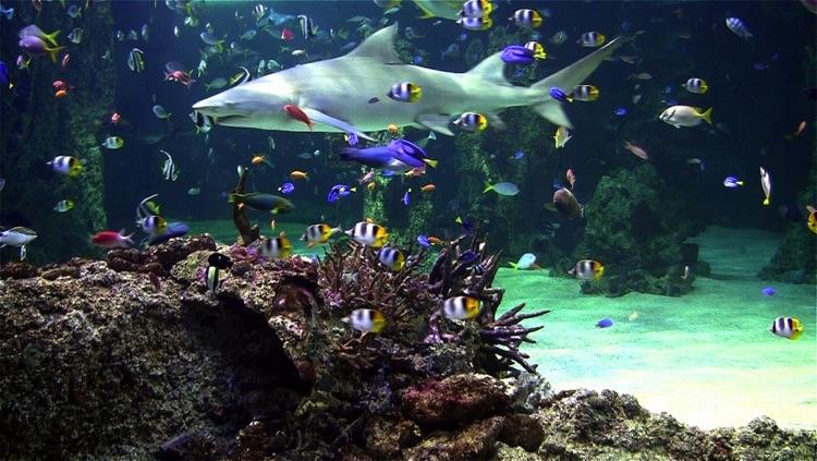 Aquarium live free screenshot-3