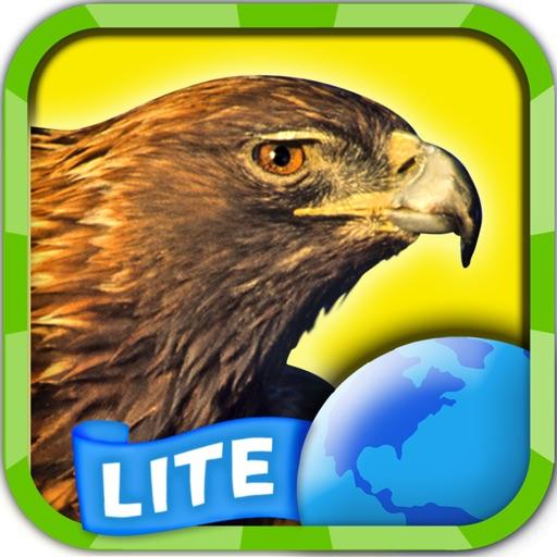 My Birds of Prey Lite