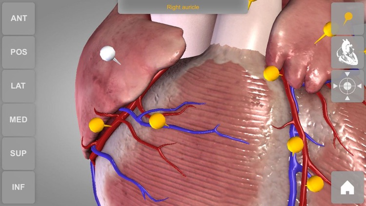 Heart - 3D Atlas of Anatomy Lite screenshot-3