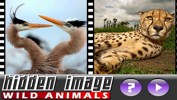 Hidden Image Animals screenshot-3