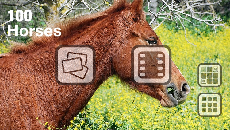 100 Things: Horses – Video & Picture Book for Toddlers screenshot-1