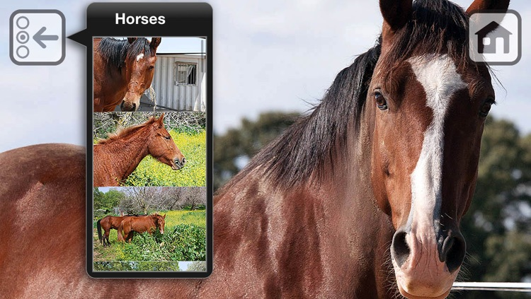 100 Things: Horses – Video & Picture Book for Toddlers screenshot-3