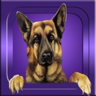 Guess it - Dog Breeds icon