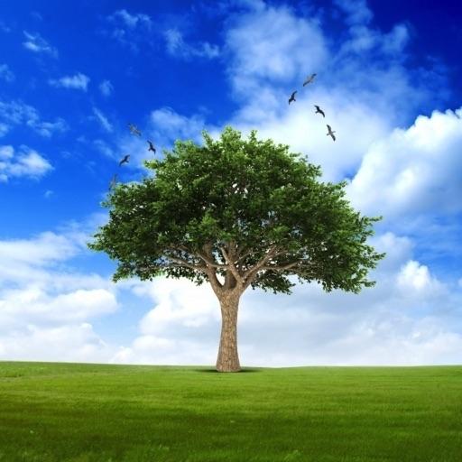 US Trees