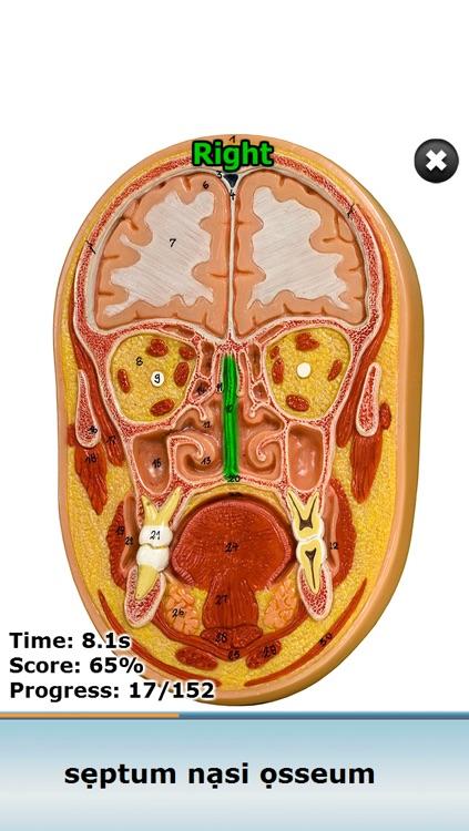 Anatomy Star - Head and Neck