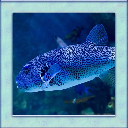 Puffer Fish Simulator 3D