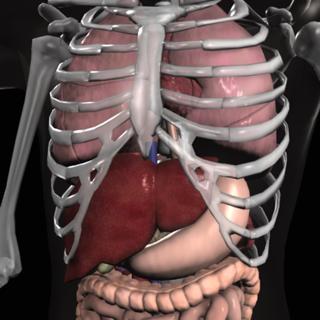 Anatomy Quiz Pro on the App Store