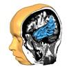 Brain Tutor HD